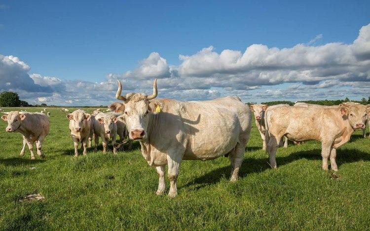Prodej hovězího masa